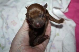 2015-01-31 brown female